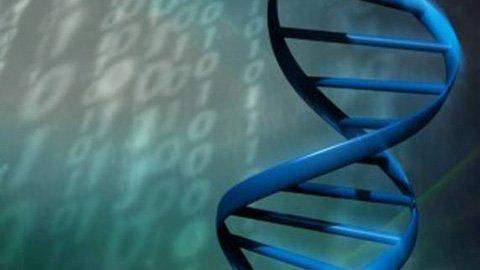 ban do gen nguoi, bản đồ gen người